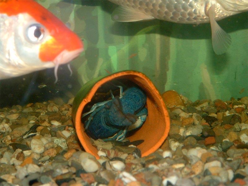 Kamera aquariumlog by kamillo koi und aquaristik for Bunte goldfische