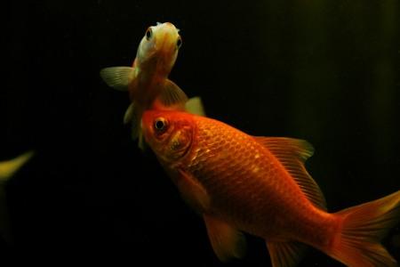 goldfische rogner milchner
